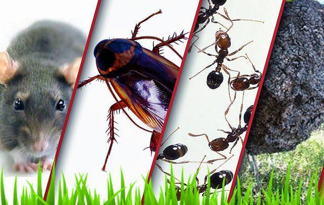 شركة مكافحة حشرات فى دبى