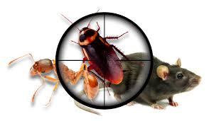 شركة مكافحة حشرات فى الشارقة