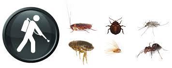 مكافحة الحشرات بالطائف